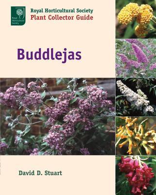 Buddlejas Cover