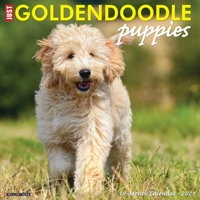 Just Goldendoodle Puppies 2021 Wall Calendar (Dog Breed Calendar) Cover Image