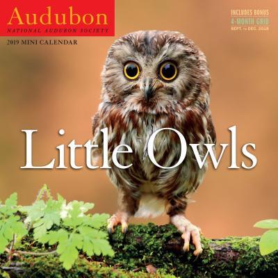 Audubon Little Owls Mini Wall Calendar 2019 Cover Image