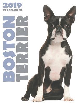 Boston Terrier 2019 Dog Calendar Cover Image