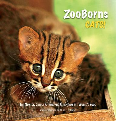 ZooBorns Cats! Cover