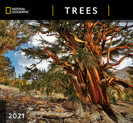 Cal 2021- National Geographic Trees Wall Cover Image