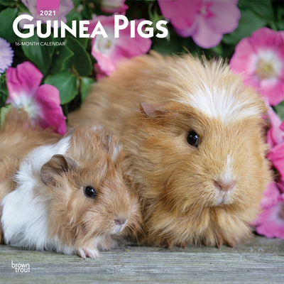 Guinea Pigs 2021 Square Cover Image