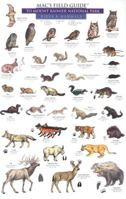 Mammals and Birds (Mac's Guides) Cover Image