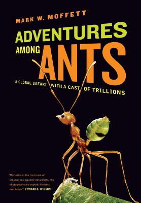 Adventures Among Ants Cover