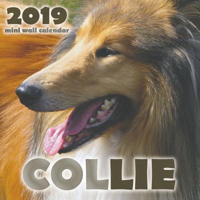 Collie 2019 Mini Wall Calendar Cover Image