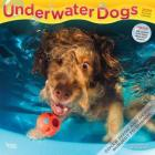 Underwater Dogs 2020 Square Cover Image
