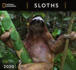 Cal 2020-National Geographic Sloths Wall Cover Image