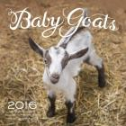 Baby Goats 2016: 16-Month Calendar September 2015 through December 2016 Cover Image