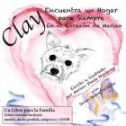 Clay Encuentra un Hogar para Siempre: En el Corazón de Marian (Clay Books #1) Cover Image