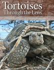 Tortoises Through the Lens: A Visual Exploration of a Mojave Desert Icon Cover Image