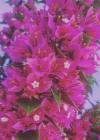 Flower Tower Sketchbook (Natural Wonders #53) Cover Image