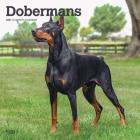 Dobermans 2021 Square Cover Image