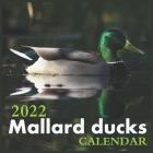 Mallard ducks Calendar 2022: Official Ducks Calendar 2022,12 Months Calendar, Wild Animals, Square Calendar 2022 Cover Image