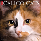 Just Calico Cats 2021 Wall Calendar Cover Image