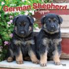 German Shepherd Puppies 2021 Square Cover Image
