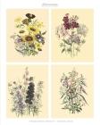 Vintage Botanical Prints Set 1 Home Wall Decor: Botanical Illustrations, Set of 6 Unframed Portrait 8x10 Posters, Housewarming Gift Idea, Wall Art Pri Cover Image
