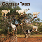 Goats in Trees 2021 Square Cover Image