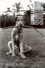 Dog Dogs Cover Image