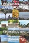 Peregrino En Contraestaca: San Ignacio, Sinaloa Cover Image