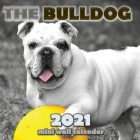 The Bulldog 2021 Mini Wall Calendar Cover Image