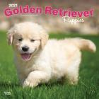 Golden Retriever Puppies 2021 Square Cover Image