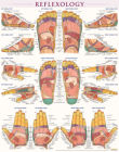 Reflexology Poster (22 X 28 Inches) - Laminated: A Quickstudy Anatomy Reference Cover Image
