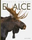 El alce (Planeta animal) Cover Image