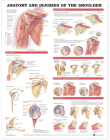 Anatomy and Injuries of the Shoulder Anatomical Chart Cover Image