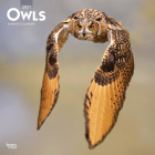 Owls 2021 Square Cover Image