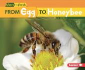 From Egg to Honeybee (Start to Finish) Cover Image