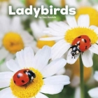 Ladybirds Cover Image