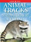 Animal Tracks of Maryland, Delaware and Virginia: Including Washington DC Cover Image