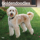 Goldendoodles 2021 Square Cover Image