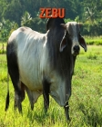 Zebu: Children's Books --- Amazing Pictures & Fun Facts on Animals in Nature Cover Image