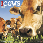Just Cows 2020 Wall Calendar Cover Image