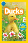 National Geographic Readers: Ducks (Pre-reader) Cover Image