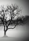 Haunted Tree Sketchbook Cover Image