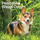 Welsh Corgis, Pembroke 2020 Square Cover Image