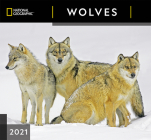 Cal 2021- National Geographic Wolves Wall Cover Image