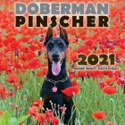 Doberman Pinscher 2021 Mini Wall Calendar Cover Image