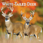 White Tailed Deer 2021 Square Foil Cover Image