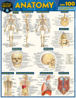 Anatomy Quizzer: A Quickstudy Laminated Reference Guide Cover Image