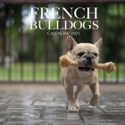 French Bulldogs Calendar 2021: 16 Month Calendar Cover Image