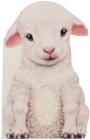 Furry Lamb Cover Image