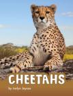 Cheetahs (Animals) Cover Image