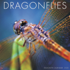 Dragonflies 2020 Wall Calendar Cover Image