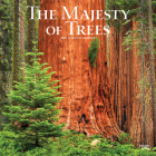 Majesty of Trees, the 2021 Square Cover Image