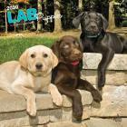 Labrador Retriever Puppies 2020 Square Cover Image