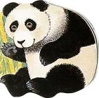 Pocket Panda (Pocket Pals) Cover Image